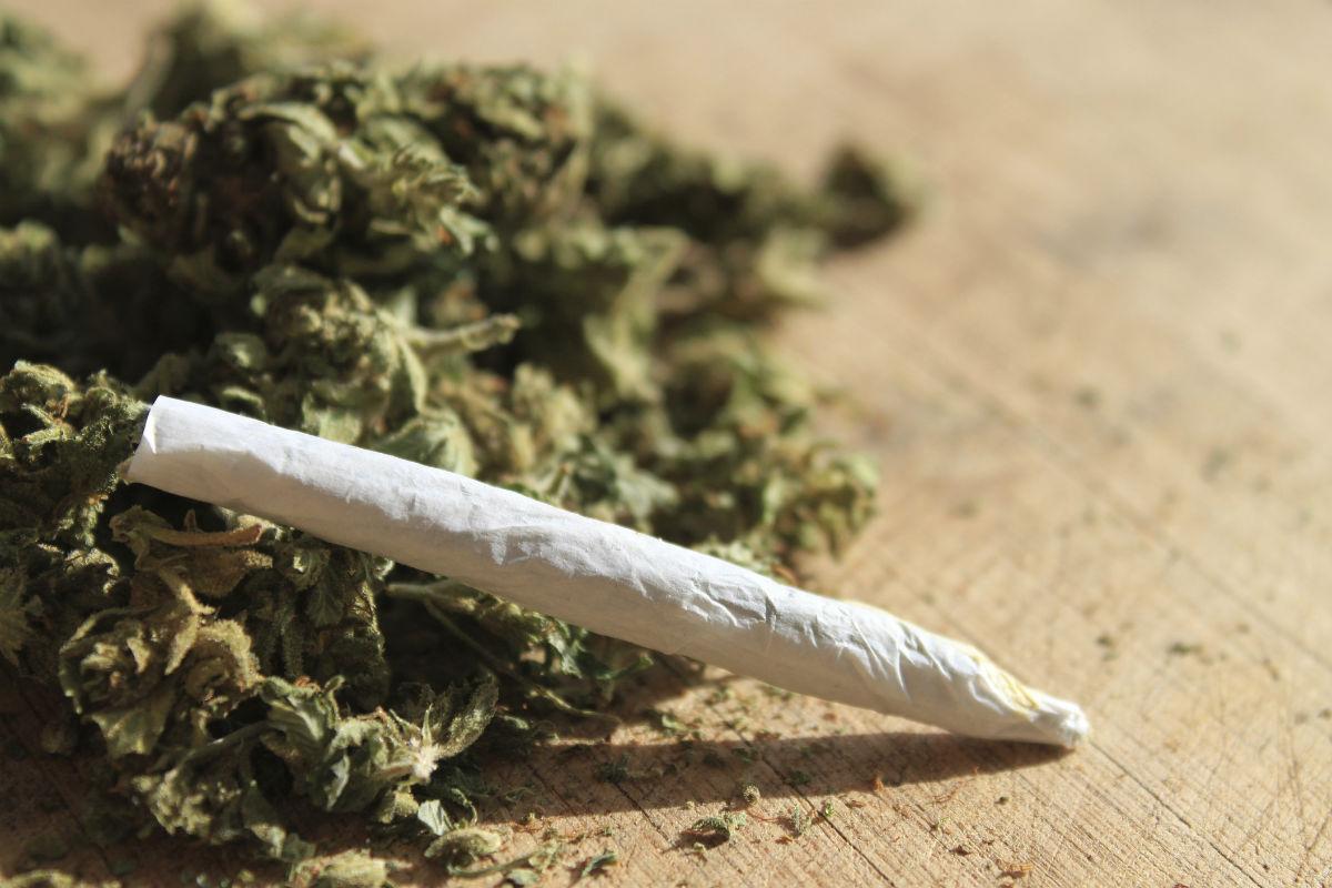 Avevano una piantagione di marijuana in un terreno agricolo, arrestati
